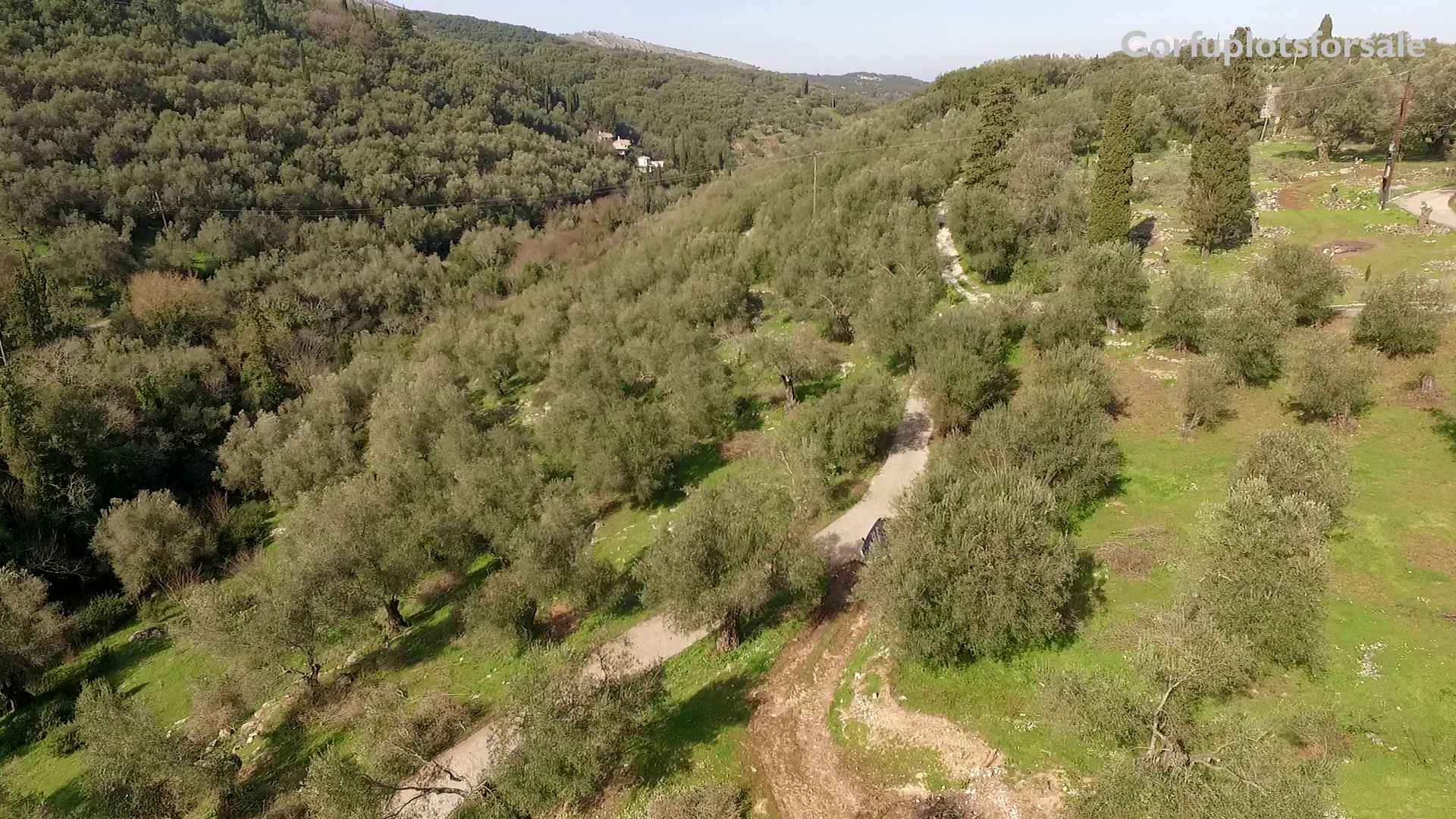 Large piece of land with an old olive grove North East Coast – 900 m from the beach