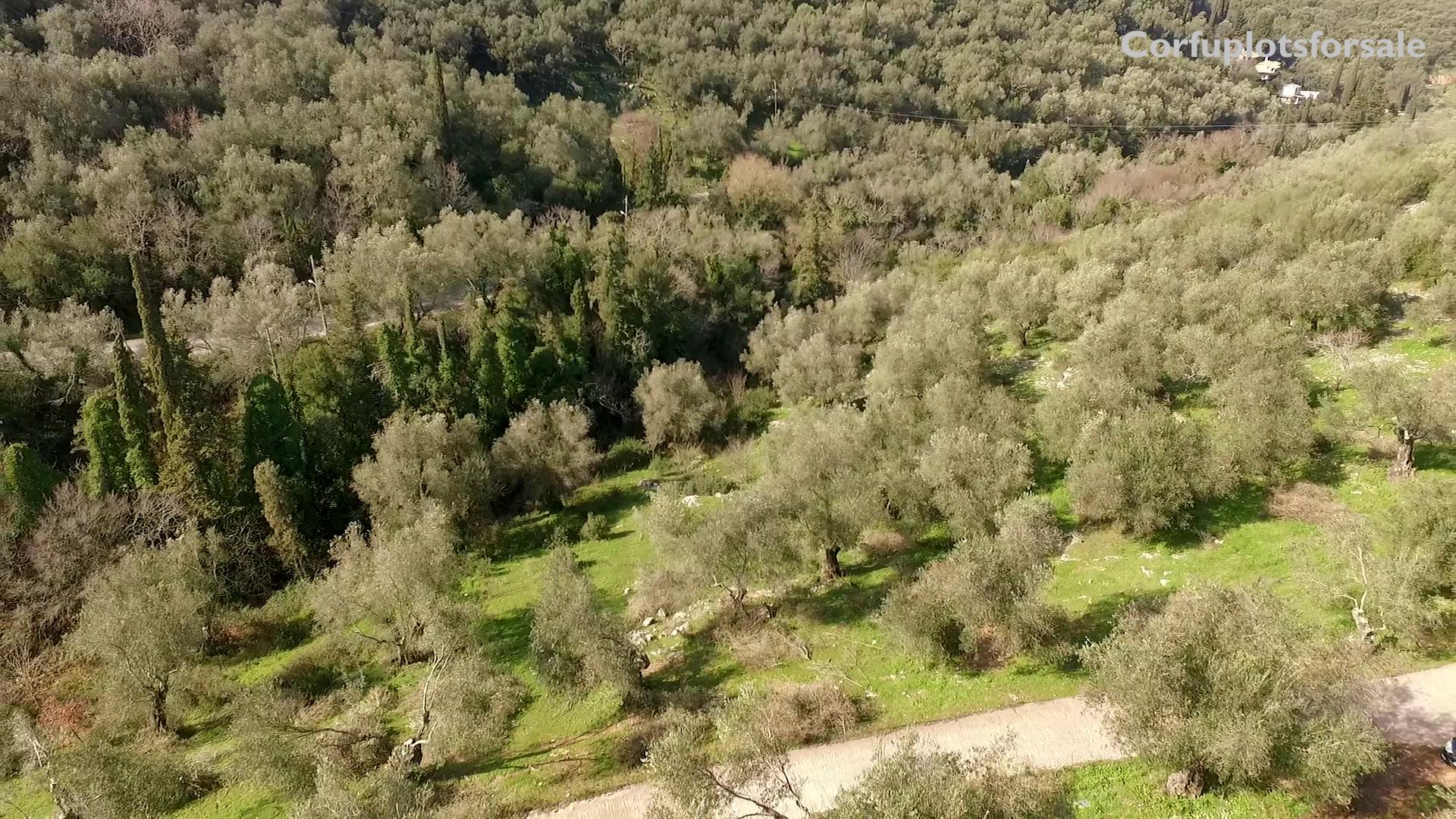 Olive-grove-plot-sinies-corfu-2