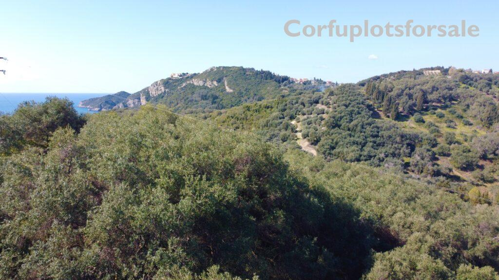 Old olive grove close to Arillas Beach