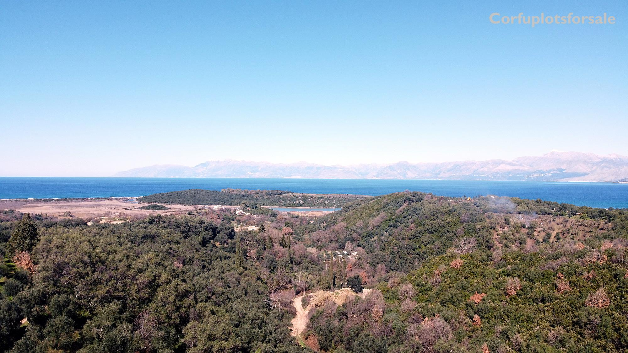 Land full of olive trees hill with panoramic view